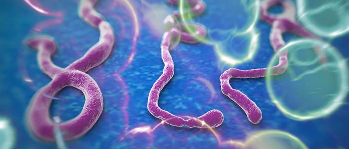 Ebola: Executive Relocations Available for Support